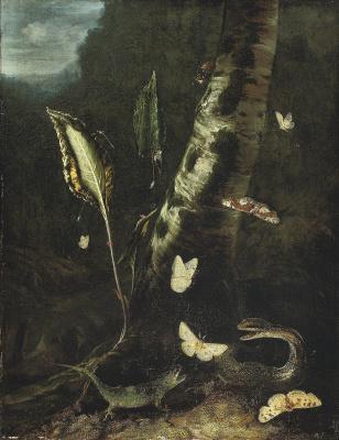 Отто Марсеус ван Скрик. Лесной натюрморт с ящерицей, змеей и бабочками