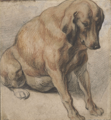 Jacob Jordaens. Sitting dog