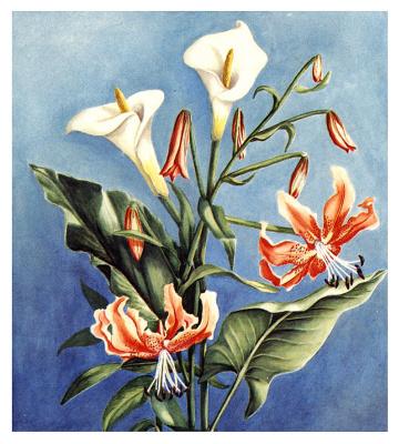 Дениз Лебурн. Цветы