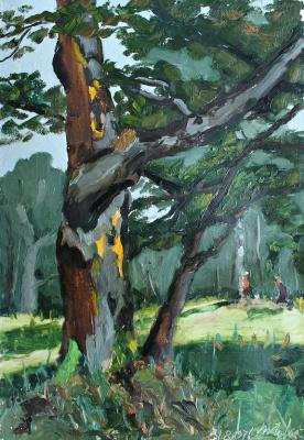 Vladimir Vladimirovich Kuznetsov. Oaks Oak