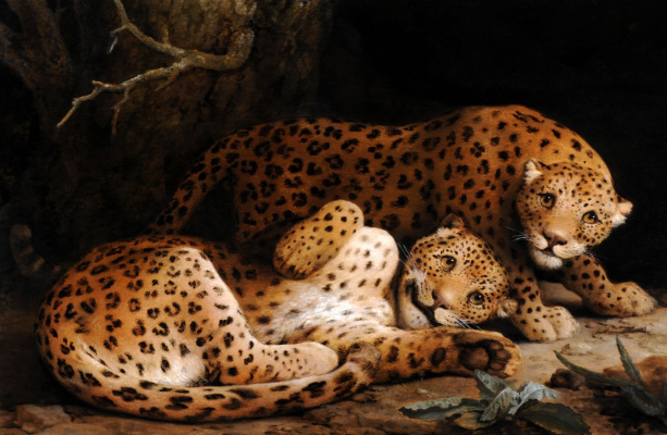 George Stubbs. Two leopard