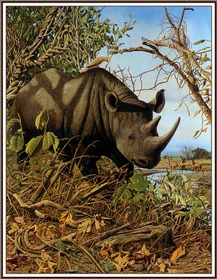 Крейг Джон Боун. Черный носорог
