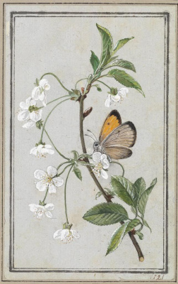 Fedor Petrovich Tolstoy. Butterfly on a blossoming branch