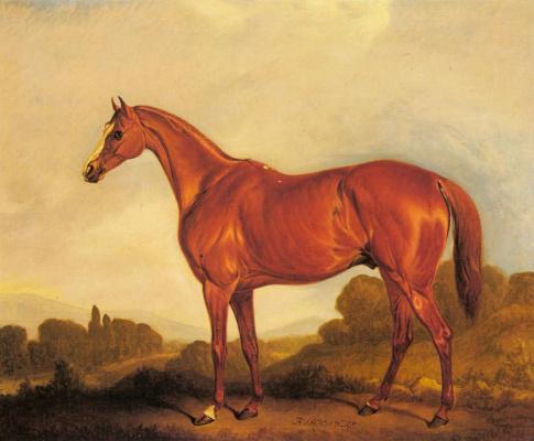 Портрет скаковой лошади