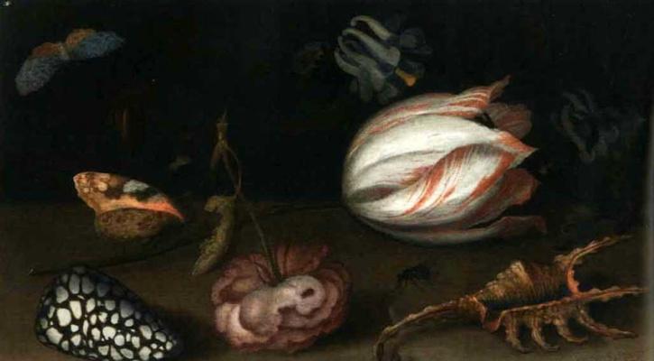 Балтазар ван дер Аст. Натюрморт с тюльпаном, розой, раковинами и бабочками