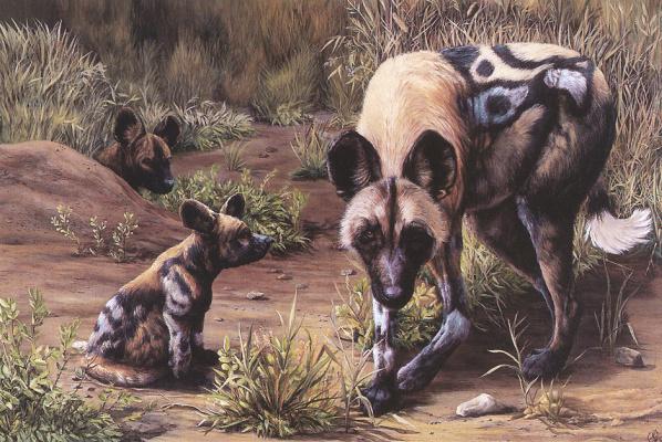 Джонсон Шеннон. Африканские дикие собаки