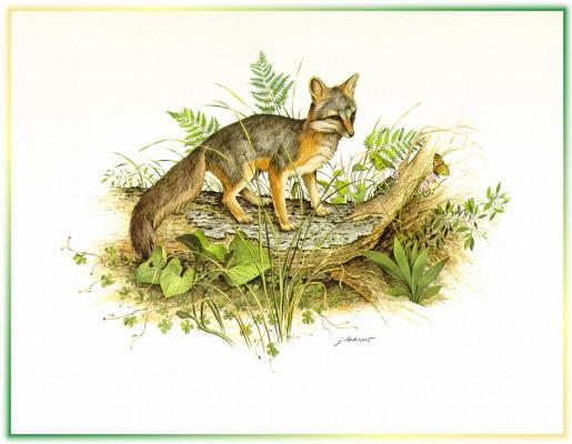 Джеймс Локхарт. Рыжая лисица1
