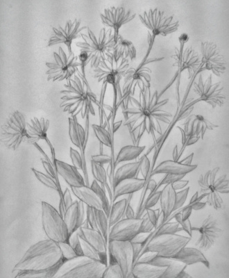 Zina Vladimirovna Parisva. Flowers