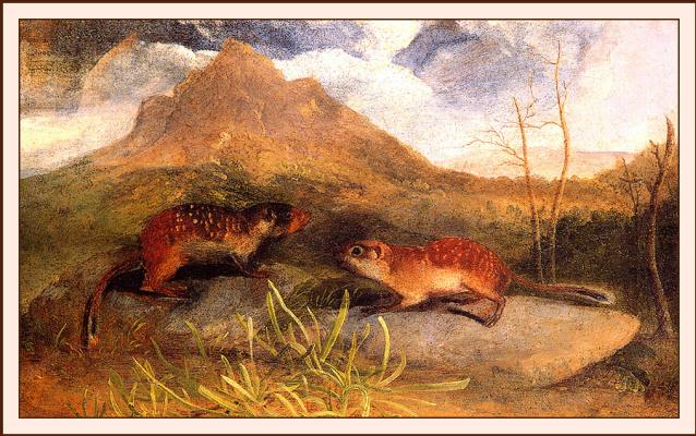 John James Audubon. Marmots