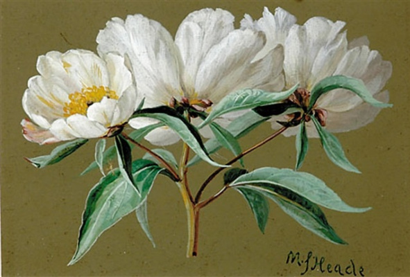 Martin Johnson Head. Branch with white flowers