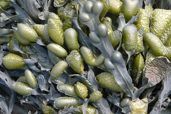 Seaweed, Moooi carpets,