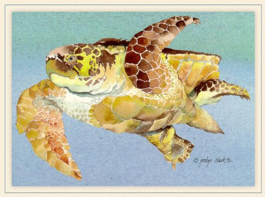 Логгерхед черепаха