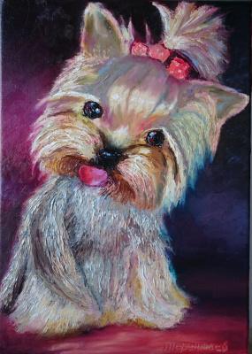 Evgeny Vladimirovich Terentyev. Yorkshire Terrier