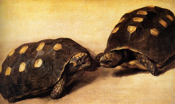 Альберт Экхаут. Две бразильские черепахи