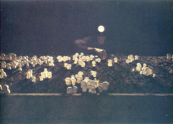 Jamie Wyeth. Mushroom
