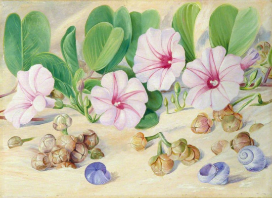 Marianna North. Flowers and shells on the sandy seashore in the tropics