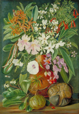 Marianna North. Collection of wild and cultivated flowers and nut puzzle, Mahe, Seychelles