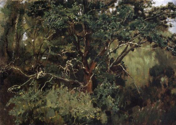 Viktor Mikhailovich Vasnetsov. Okhtyrka oak