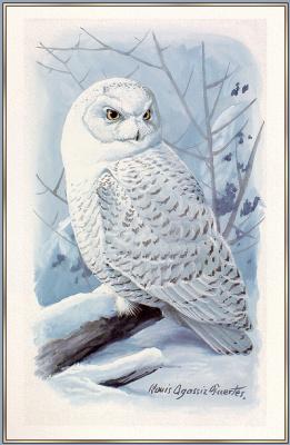 Луи Агассис. Белая сова