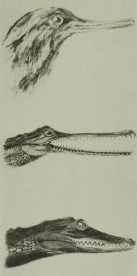 Джон Рёскин. Голова утки и двух крокодилов