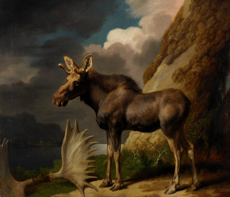 George Stubbs. Moose