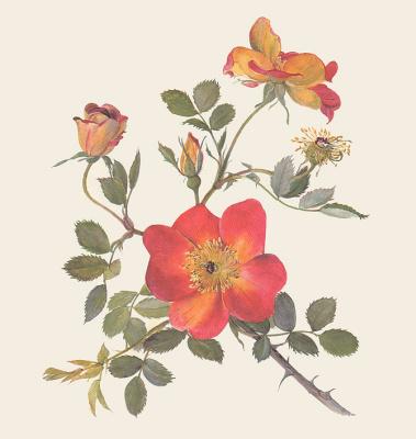 Дж Капликка. Красный цветок