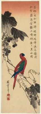 "Utagawa Hiroshige. Macaw parrot on a grape vine. Series ""Birds and flowers"""