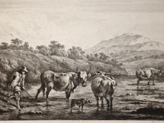 Жан-Жак де Буассье. Перегон скота