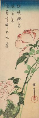 Utagawa Hiroshige. Peonies