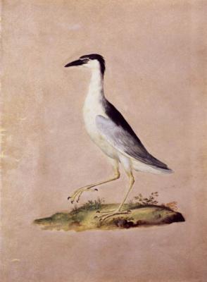 Giuseppe Arcimboldo. Night Heron