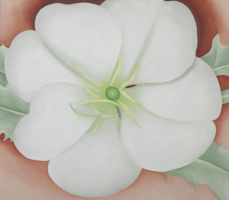 Georgia O'Keeffe. White flower on red earth