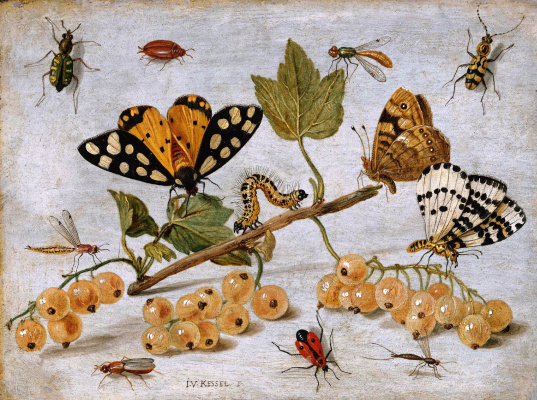 Jan van Kessel Elder. Insects and fruit