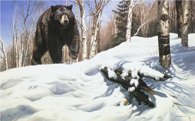 Джон Сирей-Лестер. Ломая покров - Черный медведь