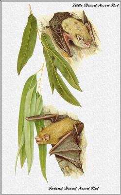 Марион Уэстмакотт. Австралийские млекопитающие 62