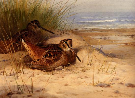 Арчибальд Торберн. На пляже