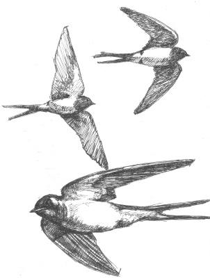 Александр Викторович Беляков. Swallows. From the series Birds.