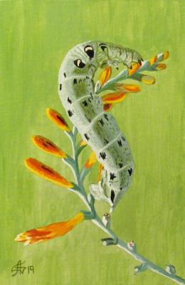 Artashes Vladimirovich Badalyan. Butterflies-8 - x-hardboard-m - 30x20