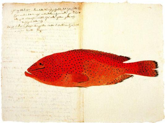 Серж Дурач. Красная рыба