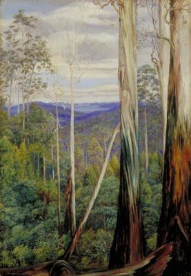 Марианна Норт. Голубые каучуковые деревья, серебряная акация и сассафрас над Юон-роад, Тасмания
