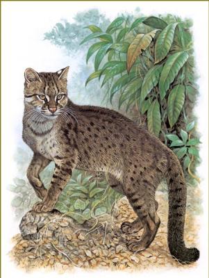 Роберт Даллет. Бенгальская кошка