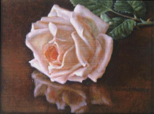 Дэвид Харди. Отражение розовой розы
