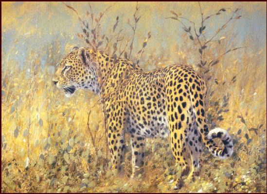 Ким Дональдсон. Леопард