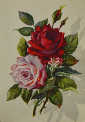 Коллекционные  открытки. Розы