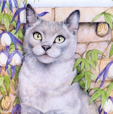 Дебби Кук. Серый кот