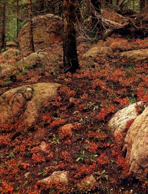 Элиот Портер. Лесной пейзаж 2