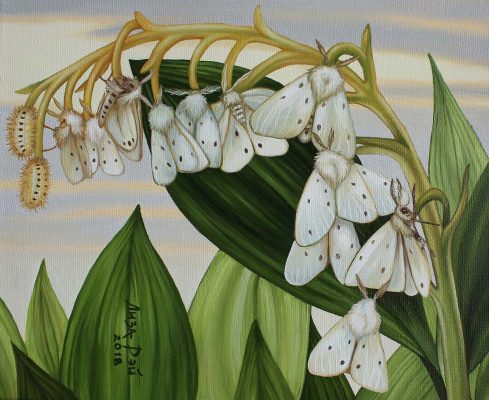 Lisa Ray. Fluttering Lily of the valley