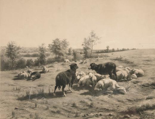 Роза Бонёр. Пасущиеся овцы