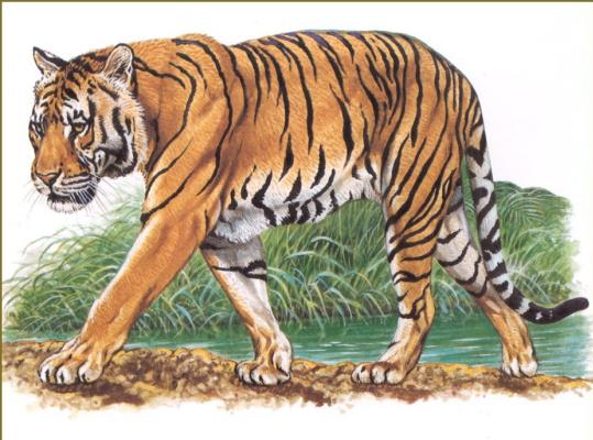 Роберт Даллет. Индокитайский тигр