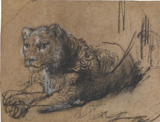 Отдыхающий молодой лев