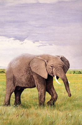 Рон Паркер. Африканский слон